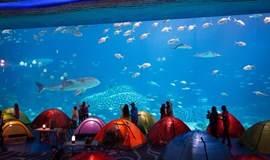 【夜宿海底世界】潜水、喂海龟、与海狮亲密接触!乐趣多!