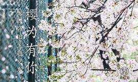 来一场樱花树下的浪漫邂逅,校园摄影主题寻爱记!