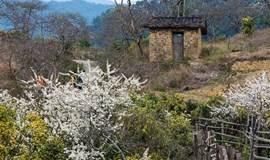 12.31周日 溯源从化 流溪河骑行 古溪线徒步赏枫叶红 趣摘当季砂糖橘