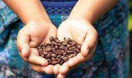 咖啡的今生前世 | 从种子到杯子的神奇之旅
