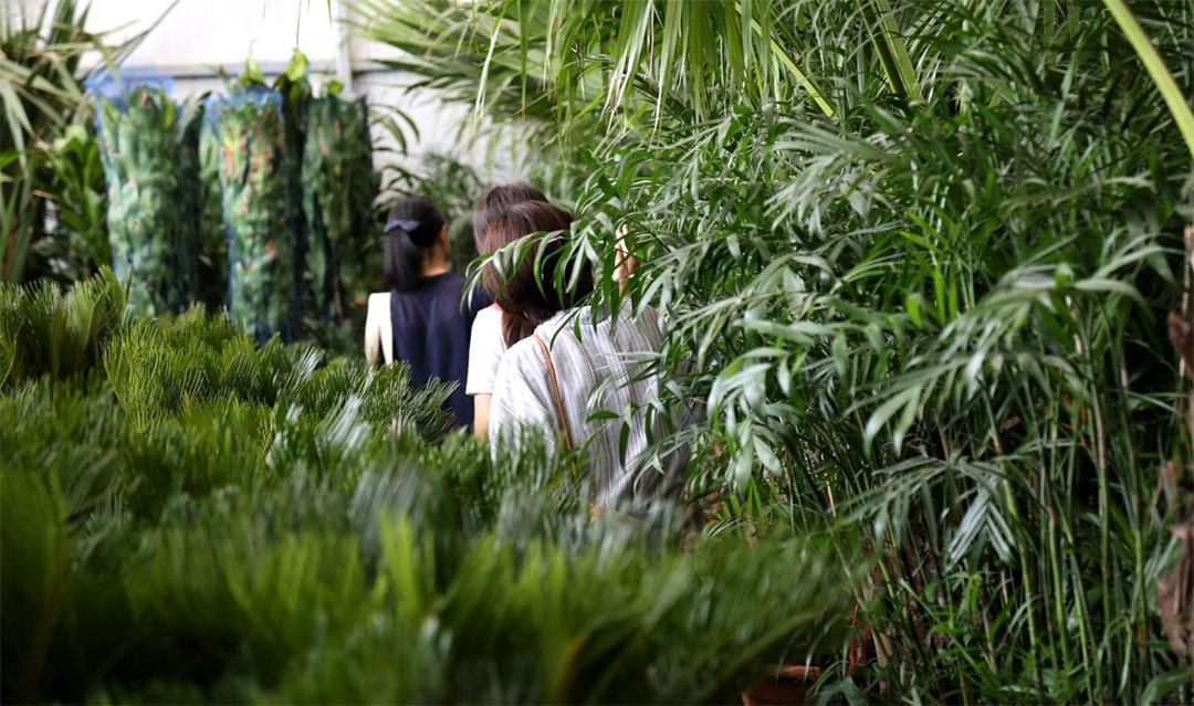 GREEN WALK丨在使馆区的国际花卉交易所,探索让家变美的窍门