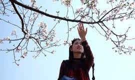 【浪漫樱花】1.28周日|新丰樱花峪寒绯樱花开,缔造浪漫时刻