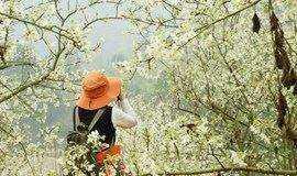 周日 相约肇庆广宁千亩山楂花 徒步 赏花 摄影 ——广州出发