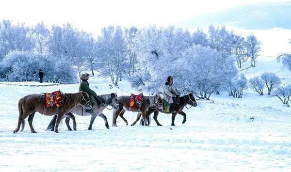 越野车深度穿越冬日乌兰布统草原,赏雾凇玉树白雪童话