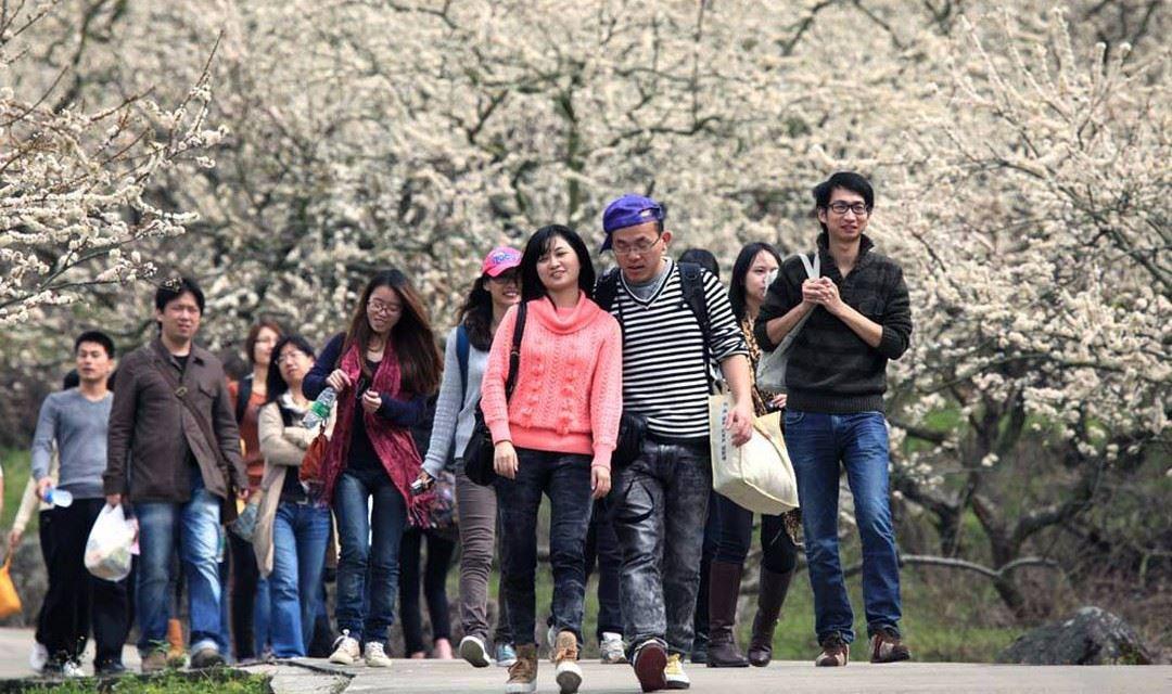 1月21号:梁化赏梅花(国内最大规模梅园,花开正盛)限量名额