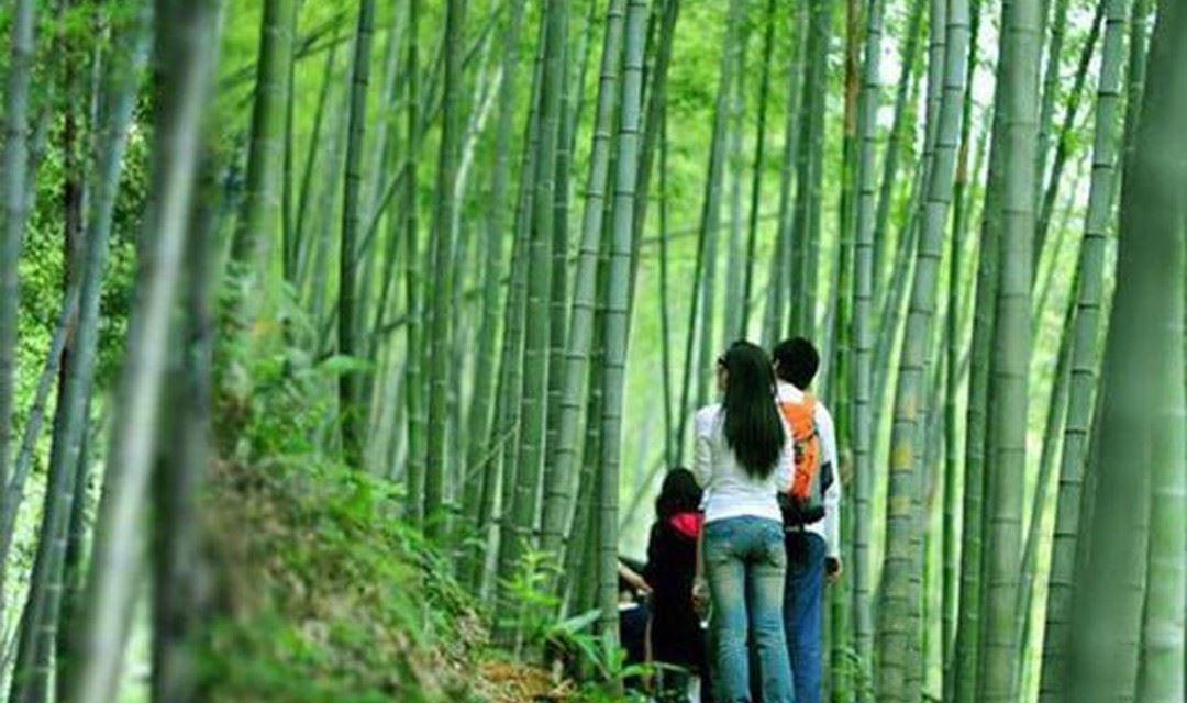 【徒步入门】1.21星溪线-徒步广州最美入门级路线