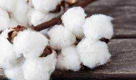 分享|鬼怪同款棉花花艺分享,在这个冬日温暖你