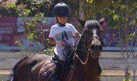 周末趣味骑马体验