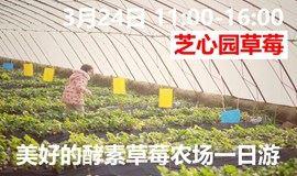 草莓农场一日游,吃鸡、采果、手作课,家庭欢乐体验