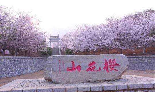 去赴一场樱花之约—3月24日—25日樱花山、周村古商城、鹤伴山两日游