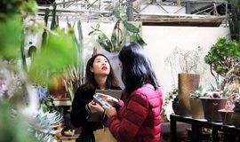 GreenWalk丨新年伊始,在使馆区的花卉交易所,感受最早的春意