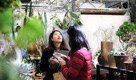 GreenWalk丨带你去使馆区的早春花市,把春天带回家