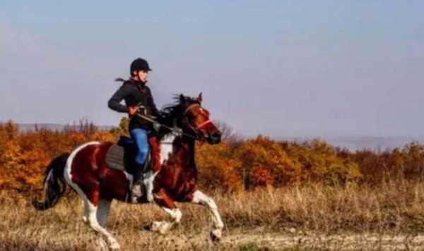 骑马营 ~ 就让小马儿度过这个3月