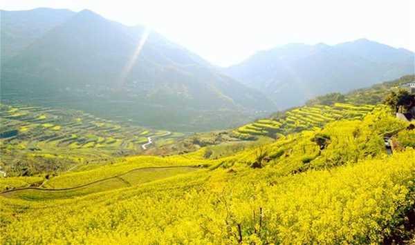 【清明-已成团】相约覆卮山:徜徉高山梯田,赏层层叠叠的油菜花(1天活动)