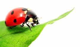 【小野人自然博物学系列】 寻找冬眠的昆虫