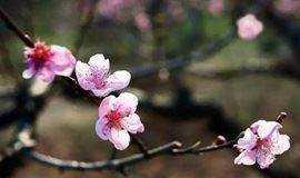 有时候,喜欢上一个人,只需要一朵花开的时间
