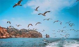 """【端午假期】山东蓬莱长岛""""神奇海岛游-万鸟岛-月亮湾""""3日海岛之旅"""