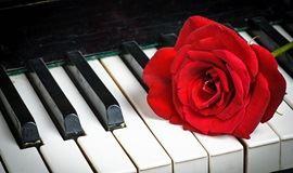 盛世学钢琴-现场让你学会弹钢琴!
