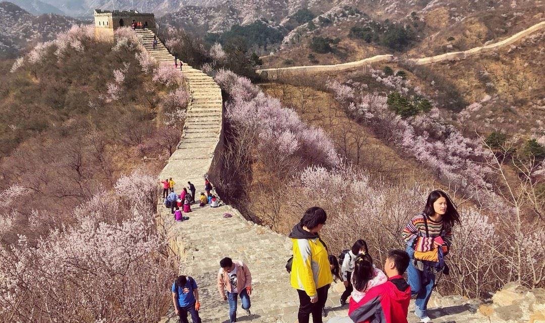 香屯古长城1日游+摄影赏花,人间四月芳菲尽,长城杏花始盛开