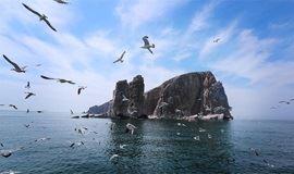 五一 · 长岛│面朝大海,春暖花开!(喂海鸥、看海豹、吃海鲜)
