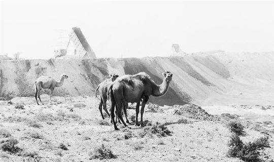 触及心灵的柔软处「哭泣的骆驼」  VIVA喊你看电影