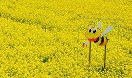 【野蘑菇】  漫步北京周边最近的油菜花田 赏樱花 郁金香 免费逛太行水镇