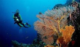 (端午假期)西冲情人岛珊瑚潜水、带您走入海底世界、快艇、烧烤 1日游