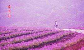 【周末】相约无锡,遇见最美薰衣草,探寻千年锡城旧时光(1天活动)