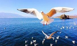 】昆明-大理洱海-丽江古城-香格里拉-泸沽湖-虎跳峡纯玩8日游