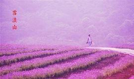 【周末-已成行】相约无锡,遇见最美薰衣草,探寻千年锡城旧时光(1天活动)