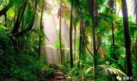 端午去印尼苏门答腊旅行,招募队友7天/2国免签{热带雨林生存挑战}