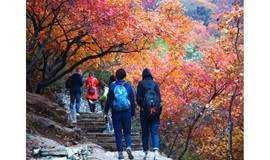 周六/周日 京郊最美秋天之 坡峰岭赏红叶,早知有坡峰岭何必去香山,一日纯玩户外休闲摄影