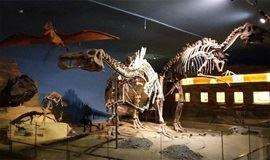 【亲子研学】跟着北大博士逛古动物博物馆,探秘恐龙时代,送菊石化石!