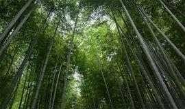 5月26日安吉黄金山,徒步章里茶马古道 ,观飞流悬瀑