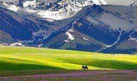 北疆│走进天山深处秘境,聆听草原开花的声音!