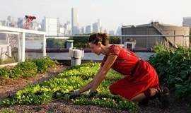 在城市的屋顶,来一场花匠的聚会
