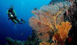 天天发团西冲情人岛珊瑚潜水、带您走入海底世界、快艇、烧烤 1日游