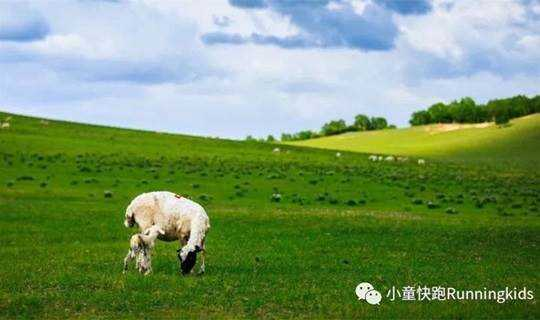 暑假去哪儿(共3期) | 策马扬鞭,篝火观星,草原徒步……带娃邂逅坝上最美丽的夏日