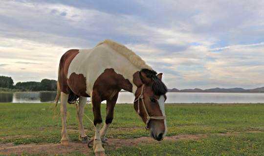 周末2日草原(周五晚上出发)坝上草原、闪电湖、看日出、骑马、免费烤全羊、篝火