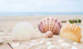 【潮尚户外】渔岛-扎营•赶海•海边烧烤•嗨歌尽享