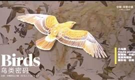 《鸟类密码》体验VR飞翔,看全息鸟迹,《华夏地理》带你玩转鸟类科幻世界