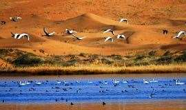 腾格里大漠-五湖穿越高档探秘之旅