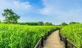 【周末-已成行】去崇明岛放空:徜徉乡间小路,漫步最美西沙湿地(1天)