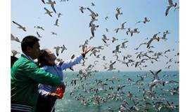 中秋节9.21-24蓬莱长岛(万鸟岛、月牙湾、九丈崖、峰山林海、黄渤海分界线)户外休闲摄影