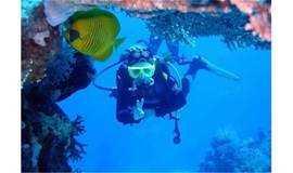 中秋/国庆【潜水体验】南澳珊瑚潜水 带您走入神秘的海底世界快艇出海烧烤BBQ