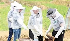一日蜂农 |来,一起来慕田峪长城脚下的梅草风契约蜂场体验养蜂