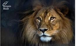 【上海大丸百货】非洲动物摄影展&动物大迁徙分享会