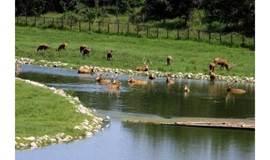 徒步皇帝行宫、麋鹿天堂——京郊秋日最美的湿地公园