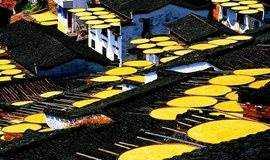 【11月份三期·火车团】水墨婺源秋景@篁岭晒秋+石城长溪微徒步