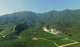 杭州龙坞茶镇游学